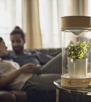 Okosnövénnyel a jó párkapcsolatért - indul a LovePlant kihívás