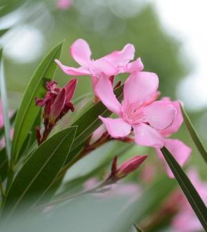 Ökológiai problémát okozhat, ha egzotikus országok növényeit hazahozzuk szuvenírként