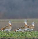 A madarak védelmében tűntek el az oszlopok