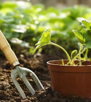 Készülj fel a kertészkedéshez!