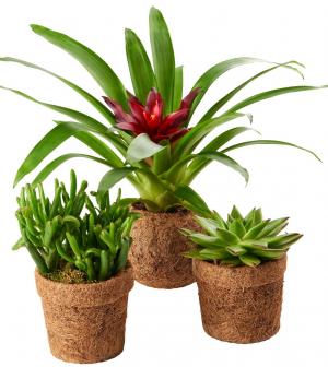 Lebomló virágcserepekkel csökkenti műanyagfelhasználását a SPAR