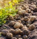 Fenntartható mezőgazdaság felé indult Európa