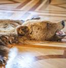 Medvebőrrel kereskedők ellen emeltek vádat Tapolcán