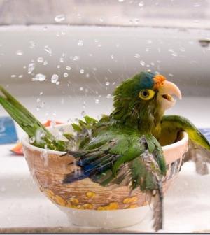 10 fontos lépés a helyes papagáj-gondozáshoz
